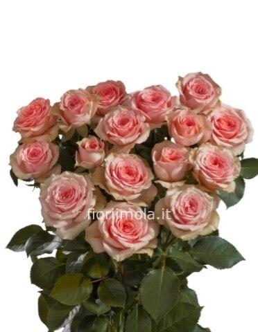 Mandare Fiori A Distanza.Rose Rosa A Steli Consegna Fiori A Imola Invio Fiori E Piante A